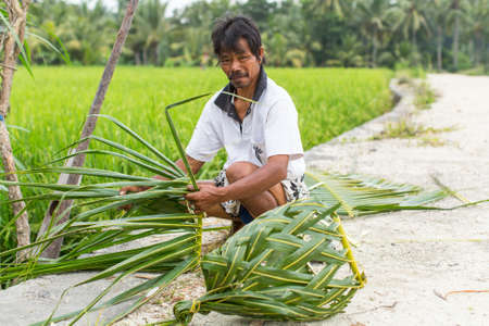 villager: UBUD, INDONESIA - MAR 16, 2016: Unidentified villager sitting near the rice fields and weaving a basket out of palm leaves. Agriculture provides employment to more than 38% population in Indonesia. Editorial