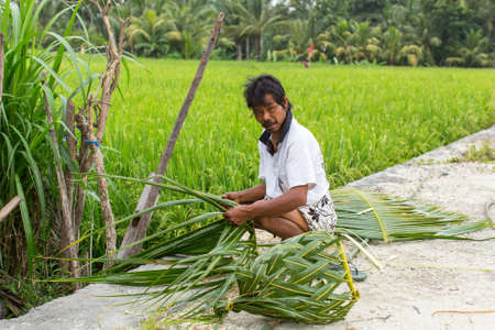 basket weaving: UBUD, INDONESIA - MAR 16, 2016: Unidentified villager sitting near the rice fields and weaving a basket out of palm leaves. Agriculture provides employment to more than 38% population in Indonesia. Editorial
