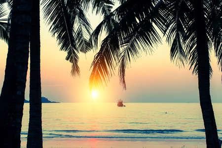 Setting sun through the palm leaves on a tropical beach.
