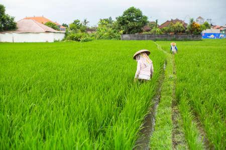 ubud: Farmers working in the rice fields.