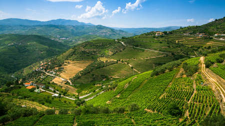 Panorama of the Douro Valley, Portugal. Vineyards on a hills.
