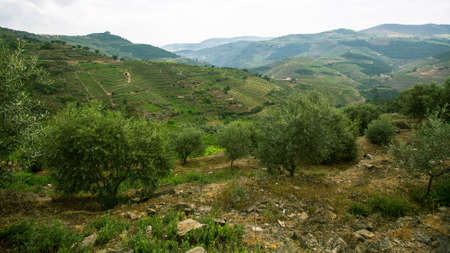 Hills of Douro Valley, Portugal.