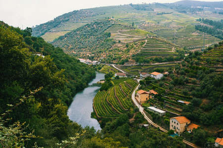View of river, and the vineyards are on a hills, Douro Valley, Portugal.