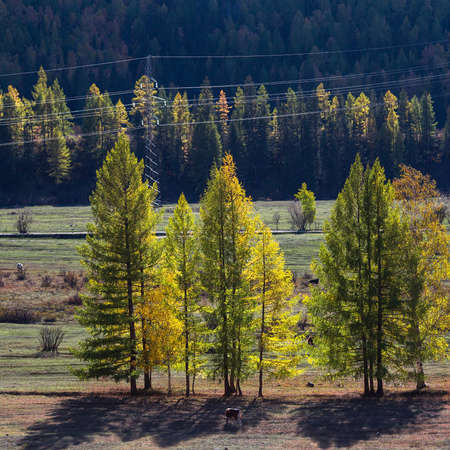 Views of the landscapes of the Altai Republic in autumn, Russia.
