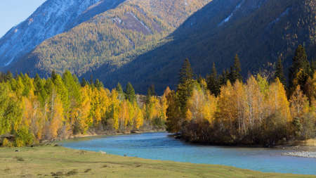 View of Katun river and autumn forest in the Altai mountains, Russia.