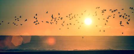 Panorama oceaanstrand bij zonsondergang met silhouetten van zeemeeuwen.