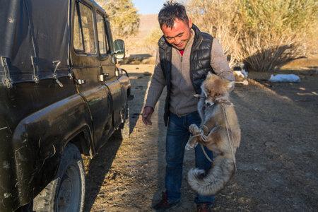 バヤン ・ ULGIY、モンゴル-2017 9 月 27: フォックス、トラップで捕まえて偽-狩り - イヌワシの餌として、使用豊かな観光客のために特別編成します。