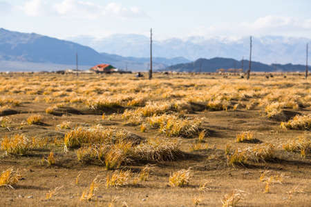 Golden yellow grass in the Mongolian steppe in Western Mongolia. 스톡 콘텐츠