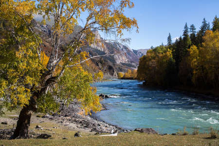 Katun river at autumn in Altai mountains, Russia.