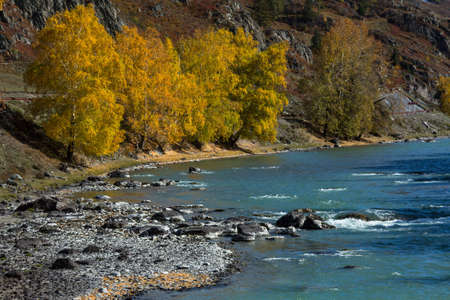 View of Katun River in Altai Mountains, Russia.