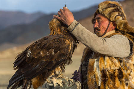 SAGSAY, MONGOLIA - SEP 28, 2017: Golden Eagle Hunter came to took the prey from the bird, stroked it, gave her a piece of meat, in desert mountain of Western Mongolia.