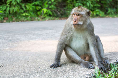 Monkey is sitting on a concreted road.