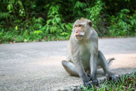 Monkey sitting on a road. Travel and tourism in Southeast Asia. Stock Photo