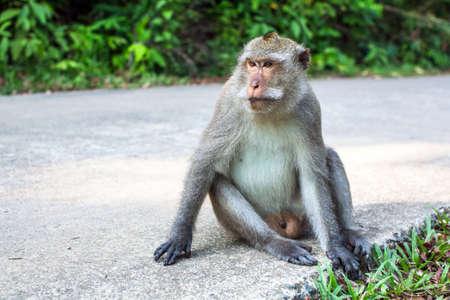 Monkey sitting on the road.