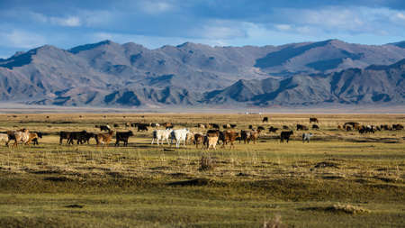 Landscape of the steppe and mountains in Western Mongolia.