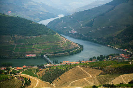 Panoramic view of the river bend in the Douro valley and vineyards in the hills, Porto, Portugal. 写真素材