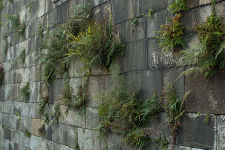 Greennery sprouting through an ancient stone wall.