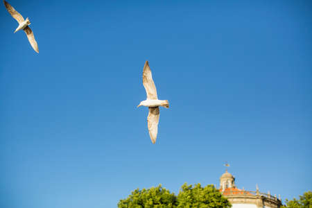 Seagulls in the blue sky above the seaside city.