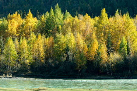View of the Chuya River and autumn forest in Altai Republic, Russia. 스톡 콘텐츠 - 155371843