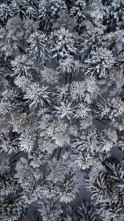 Photo from drone of snowy fir-tree tops in the woods. Stock Photo