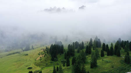 Aerial view of pine spruce forest on green meadow with low clouds and fog. Mountain range, Dolomites, South Tyrol, Italy.
