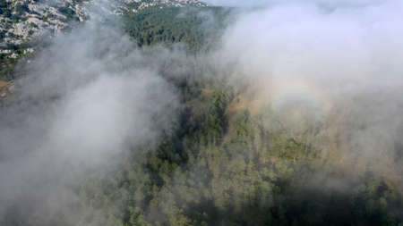 Aerial view of pine and fir-tree forest in mist early morning. Mysterious cloudy and foggy weather. Grahovo village, Montenegro nature. Drone flies in clouds above rare spruces. 4k.