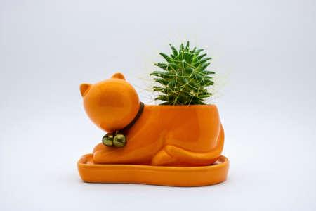 cat shaped cactus in a pot