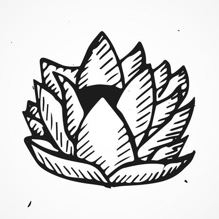 nymphaea: Hand drawn lotus flower, vector doodle element