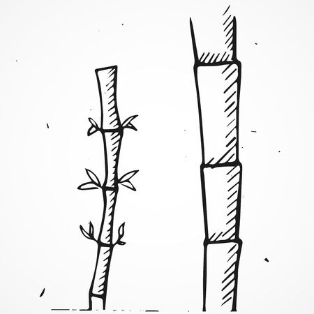 treelike: vector hand drawn bamboo branches, doodle element Illustration