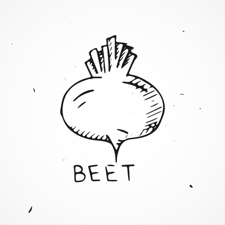 beet: Hand drawn beet isolated, doodle Vector illustration