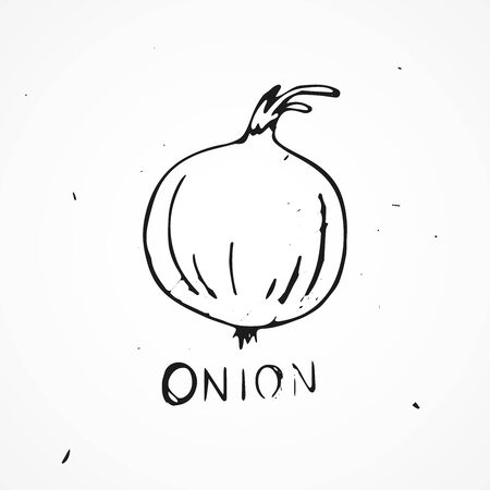 onion isolated: Hand drawn onion isolated, Vector doodle illustration Illustration