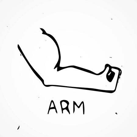 body builder: Hand drawn biceps, vector doodle body part