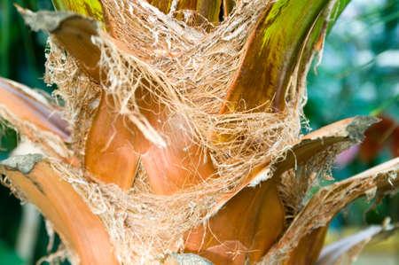 Palm Tree Closeup photo