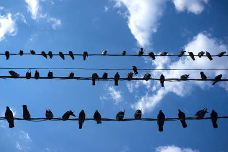 City Birds Sitting on Wires on Cloudy Sky photo