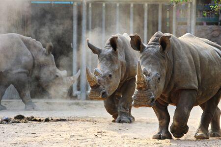 hoofed: animals in zoo park, Vietnam Stock Photo