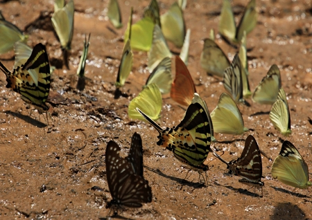 insecta: in the jungle, national park, Kat Tien, Vietnam
