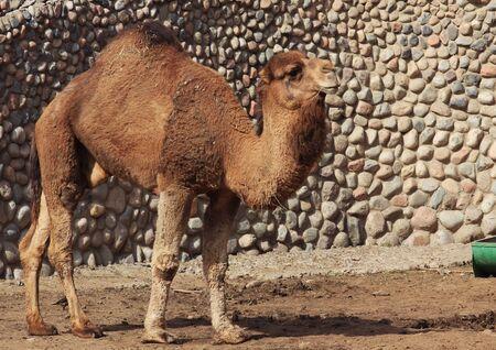 hoofed: zoo animals, Almaty, Kazakhstan