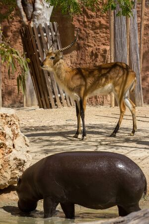 hoofed: zoo animals Stock Photo