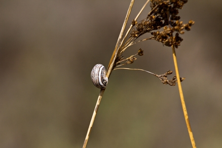 cochlea: Snail on the grass, spring, Cyprus