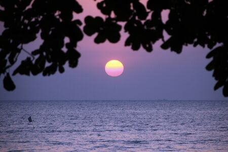 tonight: seascape with tree at sunset