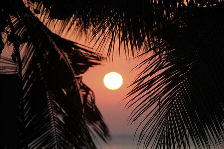 tonight: seascape with palmtree at sunset