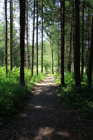 straight path: straight path in the woods