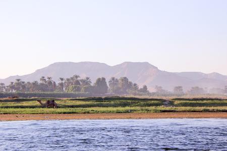 낙 타 은행에 이집트 풍경입니다. 부동 보트에서 프리의 전망입니다.