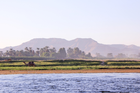 Egyptian landscape with camel on the bank. View of the landscape from a floating boat.