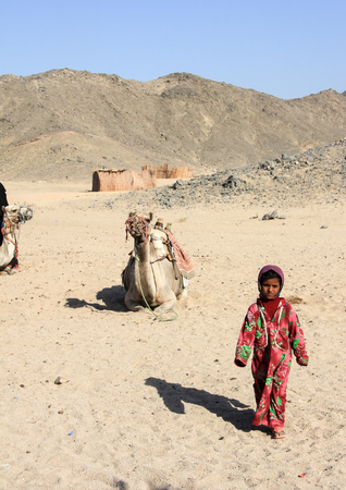 lia: The bedouin girl walking alone in the desert against the background of a lying camel and hills. Egypt, May 2012 year.