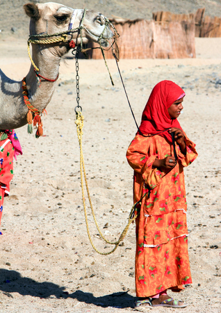 lia: A Bedouin Girl Holds a Camel for a Bridle. Egypt, May 2012 year