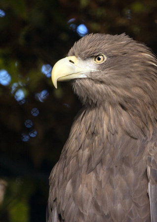 bird of prey close-up. view from the side