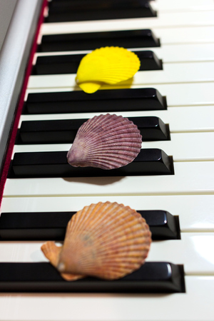 Composition of colorful seashells on the piano keyboard. Concept of music and ocean. Concept of sea sounds.