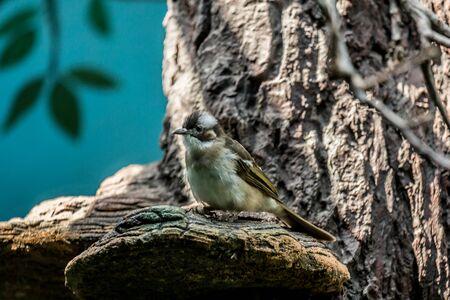 A passerine bird on the tree. Cute birds of the world. Stock Photo