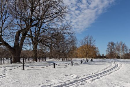 Winter landscape of an old oak in the Moscow park. Travel around Russia in the cold season.